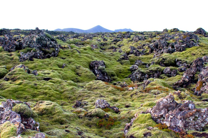 Green moss carpeting lava fields